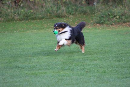 härliga hundar blogg