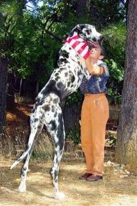 största hundrasen